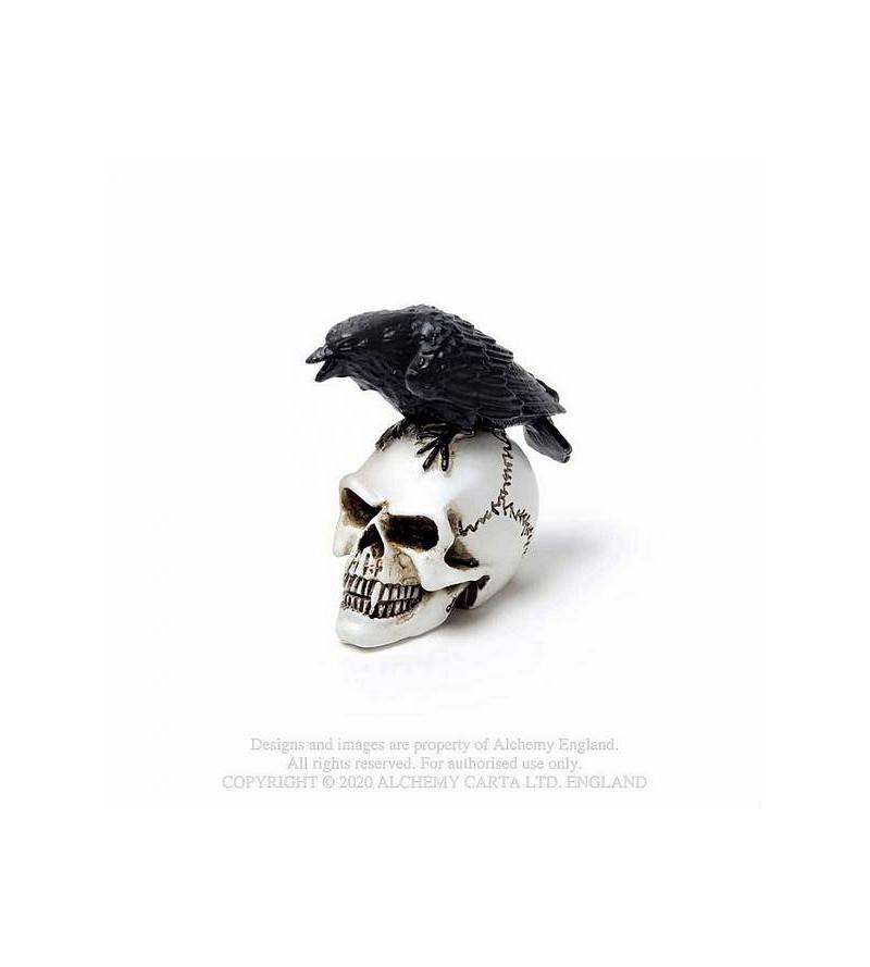 Miniature Raven skull